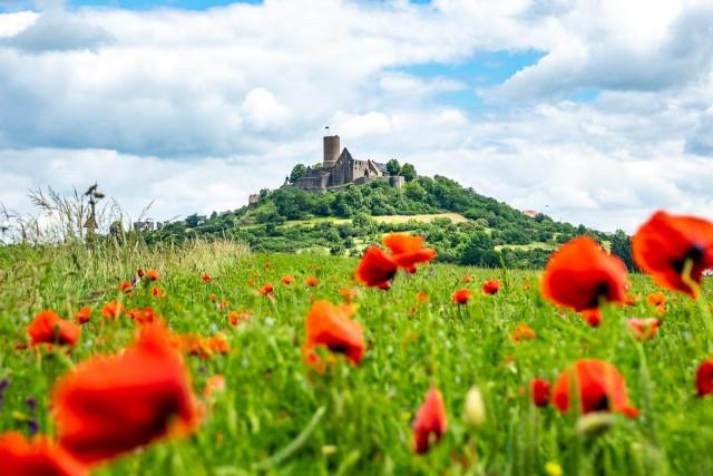 Die Burg Gleiberg mit Mohnblumen