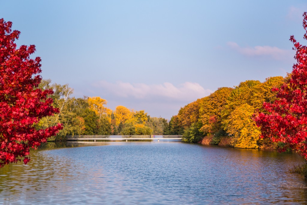 Herbst am Schwanenteich in Gießen